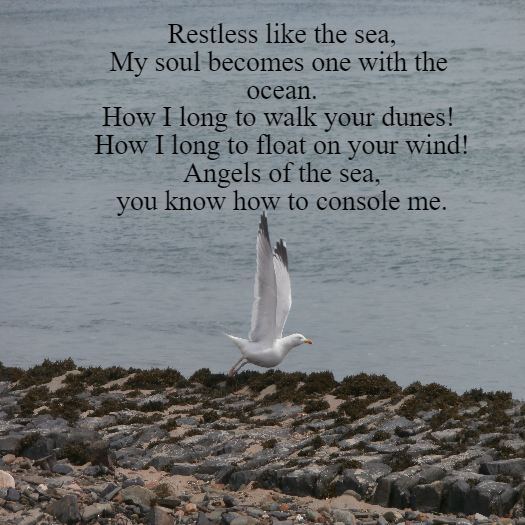 Sea Angels