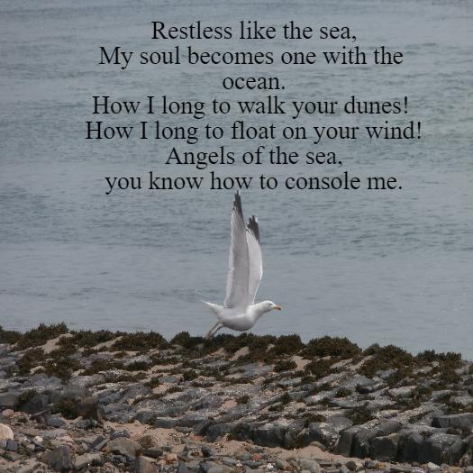 Sea Angels